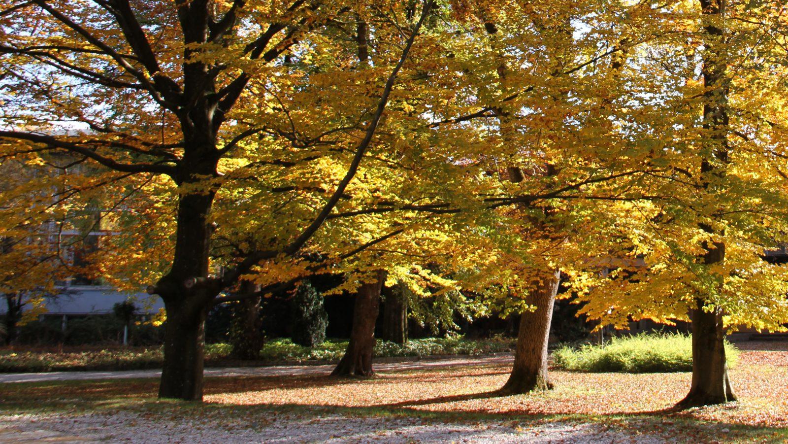 Love your tree house ( LYTH )